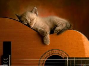 cat-on-guitar