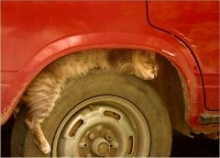 cat-on-wheel2