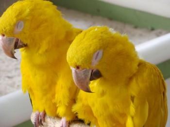 birds-sleeping